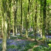Woods near Herstmonceux Castle