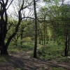 Woodland glade on the Heath