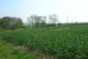 Farmland near Kilham