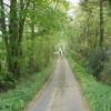 Tree-lined lane, north of Shortmoor Cross