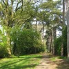 Carpenders Park Lawn Cemetery: Woodland Walk
