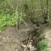 Brook running through Haugh Wood
