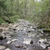 River Calder, Curwen Wood