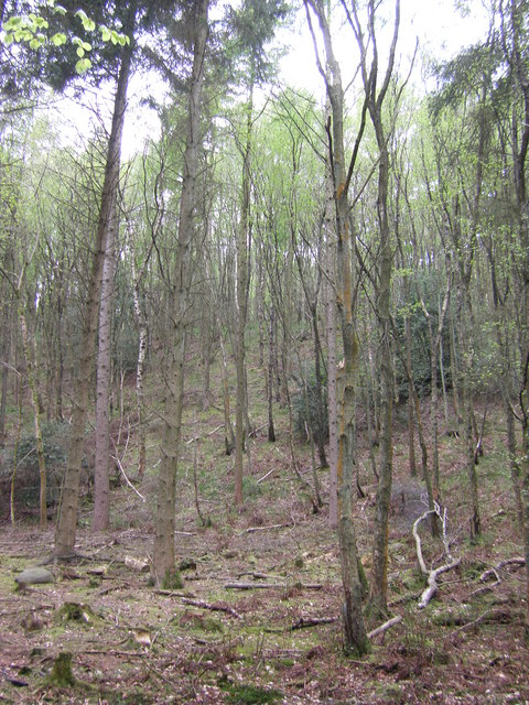 Wooded Valleyside, Sullom Wood