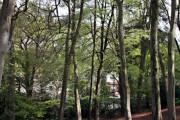 Milber Wood