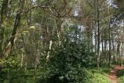 Footpaths in Milber Woods