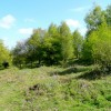 May Hill Common 2