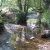 Hartsbourne Stream: Confluence with Oxhey Stream