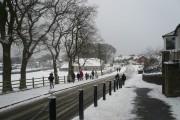 Bream in winter