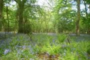 Spring comes to Limekiln Wood