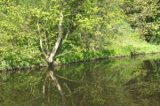 A steeply wooded bank between the Water of Leith and the Gallery of Modern Art