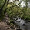 River Heddon