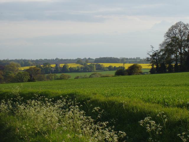 View towards Hawstead Church