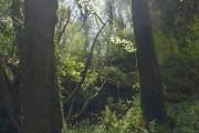 Spring in Silveridge Wood