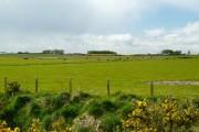 Farmland near Wester Arboll.
