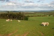 Farmland on Boon Hill
