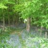 Footpath in Limekiln Wood