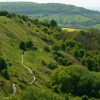 Crickley Hill Country Park (1)