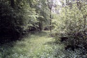 Howe wood near Haverhill, Suffolk