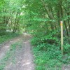 Footpath and Trot in Bank Wood