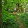 Footpath in Kite Hill Wood