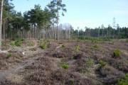 Regenerating cleared area