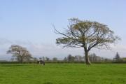 Pasture, Newton Arlosh