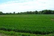 Farmland South East of Skerne