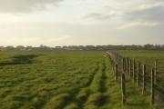 Newton Marsh