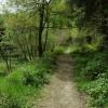 Forest path near Brierley