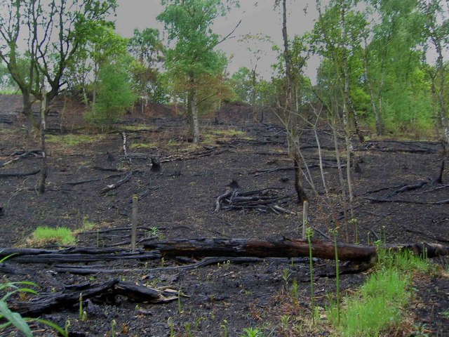 After the fire, Horse Carr wood