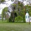 A WillowTree near the Memorial