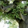 Unusual Tree