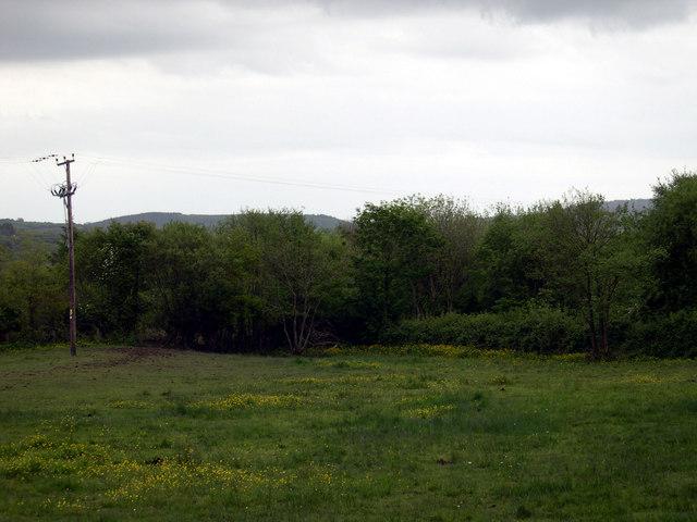 Woodland near Brown Hill Heol Lotwen