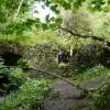 The Fairy Bridge