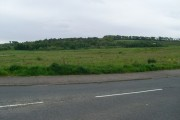 Woodland by the M77