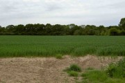 Across the field to the woods containing Haughton Decoy ponds