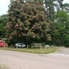 Chestnut tree at the junction, Feniton