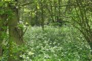 Woodland near Brackenholmes