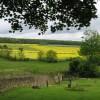 Old Whittington - view to Grasscroft Wood