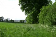 The edge of Greenway Copse