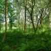 Woodland by the Ravenglass & Eskdale Railway line