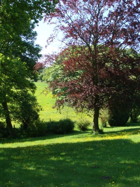 Fields from the roadside, Catbrook