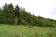 Field & trees by the railway line