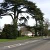Cedar tree, Myton Road