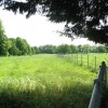 Pastures in Raveningham Park