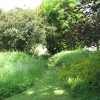 Path from St Andrew's to Raveningham Hall