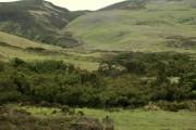Juniper plantation