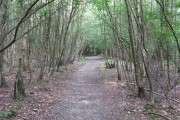 Sussex Border Path in Northland Wood