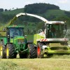 Chopping Grass for Silage